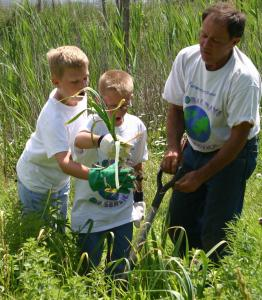 kids harvesting garlic